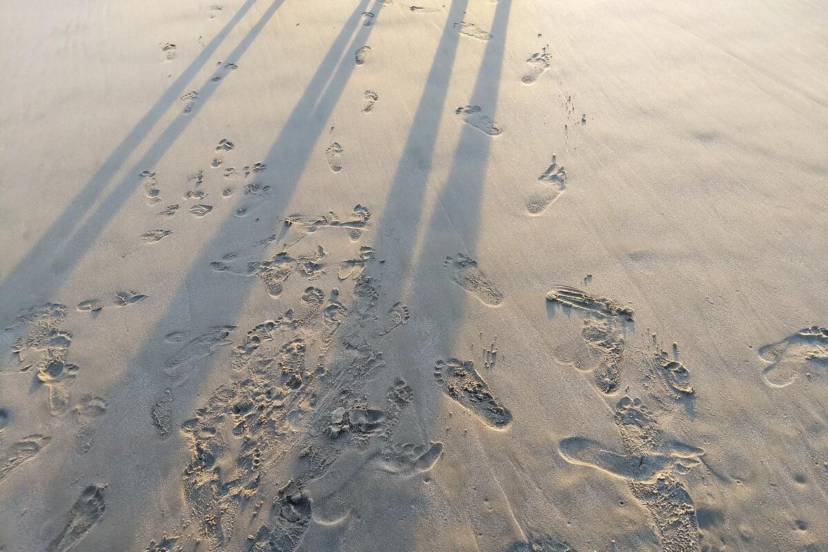 steps... - foto di alessandro guerrini