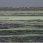 barriera corallina - by alessandro guerrini