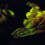 momix - botanica - by alessandro guerrini