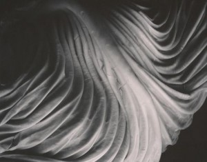 Cabbage Leaf, 1931 - © 1981 Center for Creative Photography, Arizona Board of Regents
