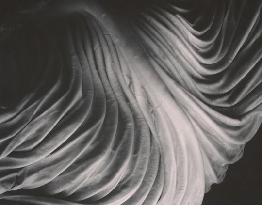 Cabbage Leaf, 1931, ©1981 Center for Creative Photography, Arizona Board of Regents