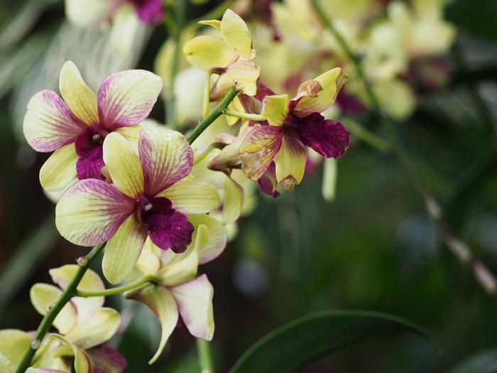 giardino botanico delle orchidee - singapore - by alessandro guerrini