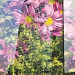 chlorophyll - by marco besana