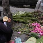 pane e tulipani - foto di francesca nazari