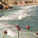 la costa dal castello di sagres - foto di donato guerrini