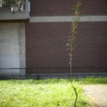 la primavera non si cura del covid-19 - foto di donato guerrini