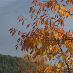 foliage - foto di donato guerrini