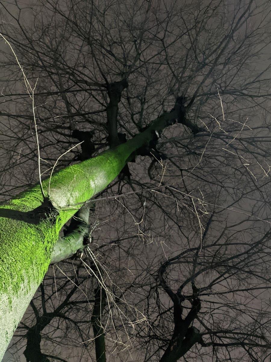 bosco incantato - foto di alessandro guerrini