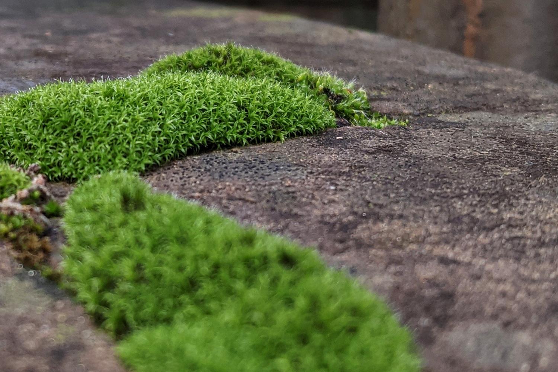 marea verde - foto di alessandro guerrini